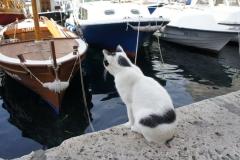 Dubrovnik 25
