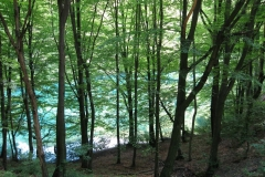 Shimmering water beyond the trees in Szalajka Volgy