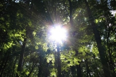 The bright sun penetrates the forest canopy