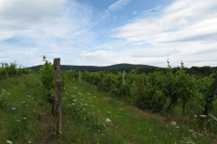 Wispy clouds follow the vines at Noszvaj