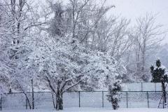 Yasu snow