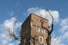 Tower and Tree. Wawel Hill, Kraków