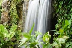 Ginger waterfall