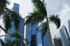 Towers through palms