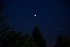 Bled Blood Moon